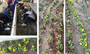 화단 정리 및 꽃심기